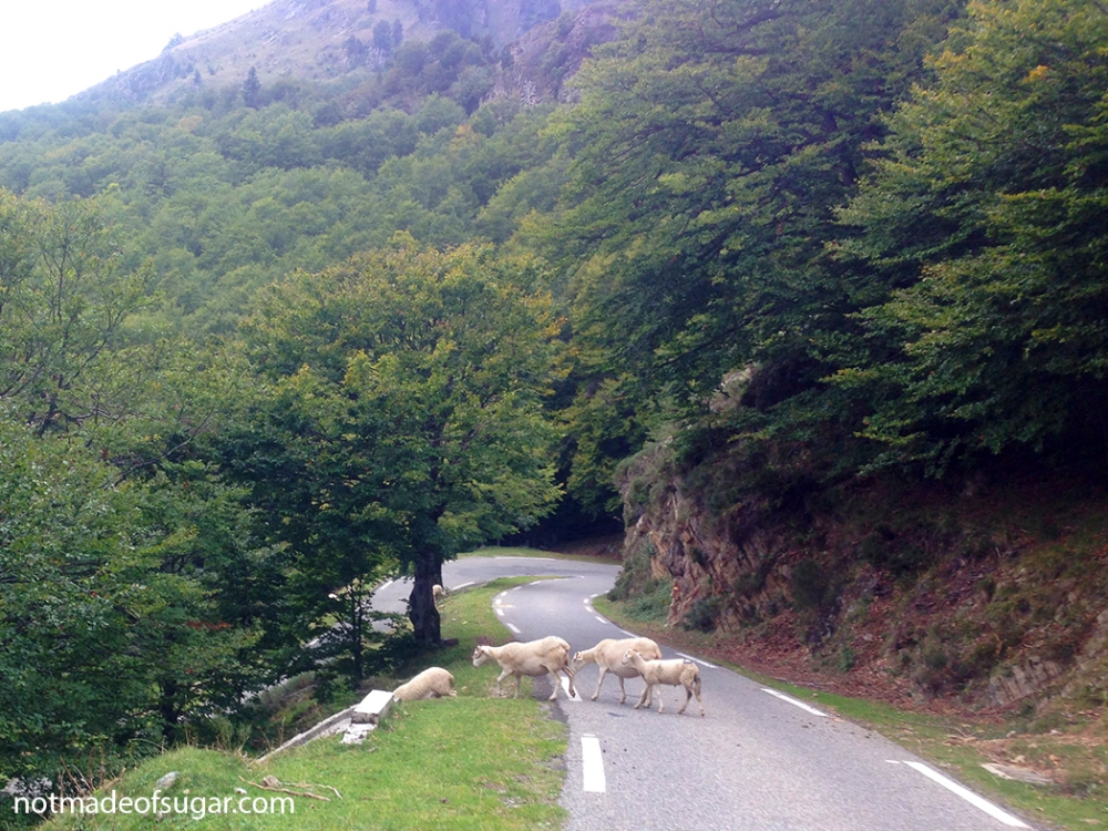 col_de_pailheres_sheep_1048.jpg